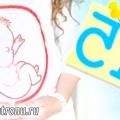 15 Тиждень вагітності
