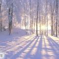 Кольоротип - зима