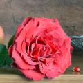 Квіти як би від чоловіка