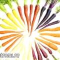 Овочі, в яких ховаються корисні мікроелементи