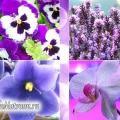З чим поєднується фіолетовий колір: фотоогляд