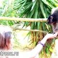 Дивовижний зоопарк - monkey park на тенерифе!