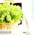 Як скласти композицію з рослин горщиків