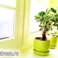 Кімнатні рослини - десять головних правил