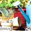 Пересадка кімнатних рослин - про що слід знати!