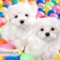 Самі дружелюбні породи собак для дітей