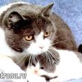 Порятунок кошенят - кішка героїня