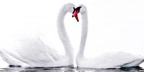 Красиві й мудрі фрази про кохання і шлюб